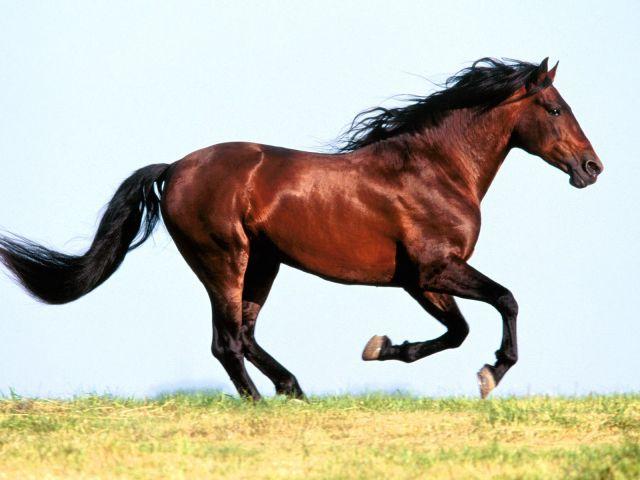 Horse-16-EPFQYQ9LI2-1600x1200